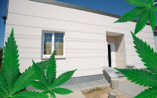 Why building with hemp is good for the environment